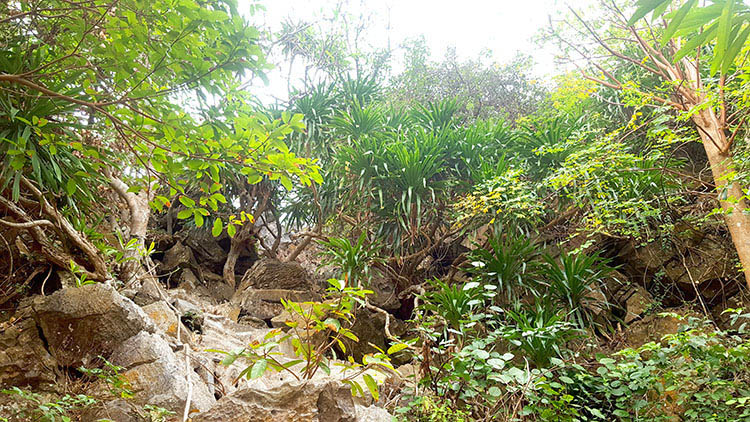 monkey island forest